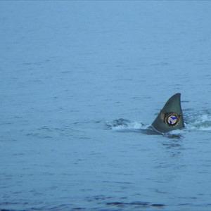 Najväčší žralok ulovený na Domaši, dokonca s chytrými hodinkami!